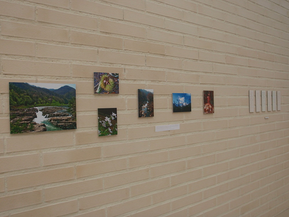 Random work from Mayumi Niiranen Hisatomi | Installation  2012 | Tanzaku from one Japanese lady who had lived in Fukushima