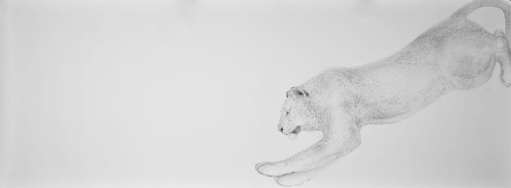Random work from HENNI KITTI | PIIRUSTUKSET ////////// DRAWINGS | Leijona ja väri; 400 x 150 cm; lyijykynä ja värikynä paperille; 2010