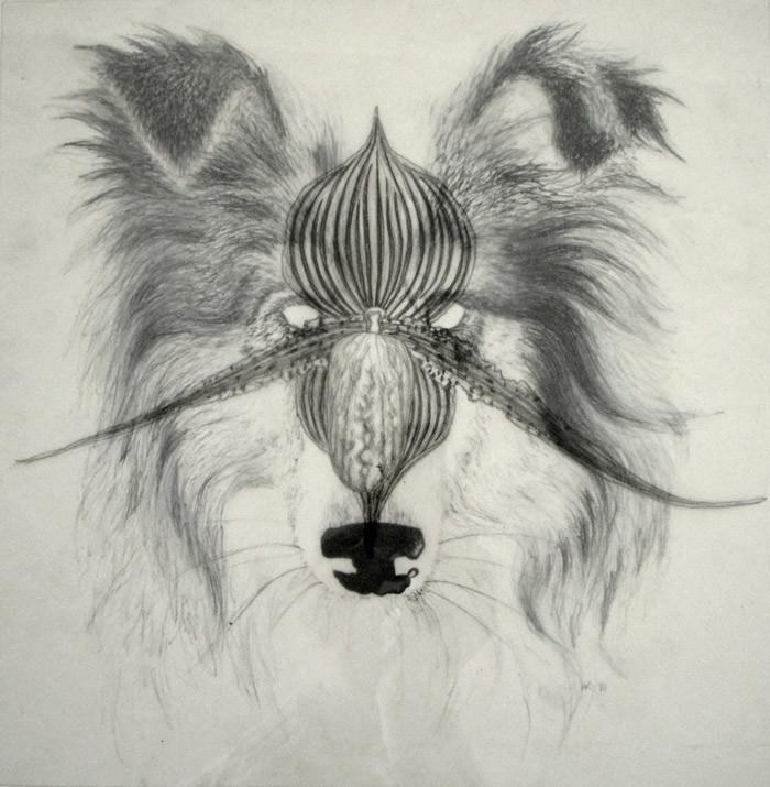 Random work from HENNI KITTI | PIIRUSTUKSET ////////// DRAWINGS | Nimetön (koira ja orkidea); 29 x 29 cm; litografia ja lyijykynä; 2010