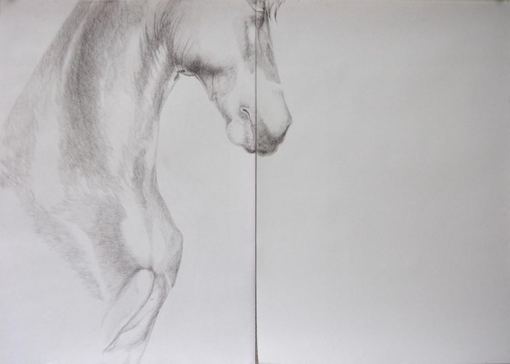 Random work from HENNI KITTI | PIIRUSTUKSET ////////// DRAWINGS | Hevosen pää; 143 x 101,5 cm; kuulakärkikynä paperille; 2008