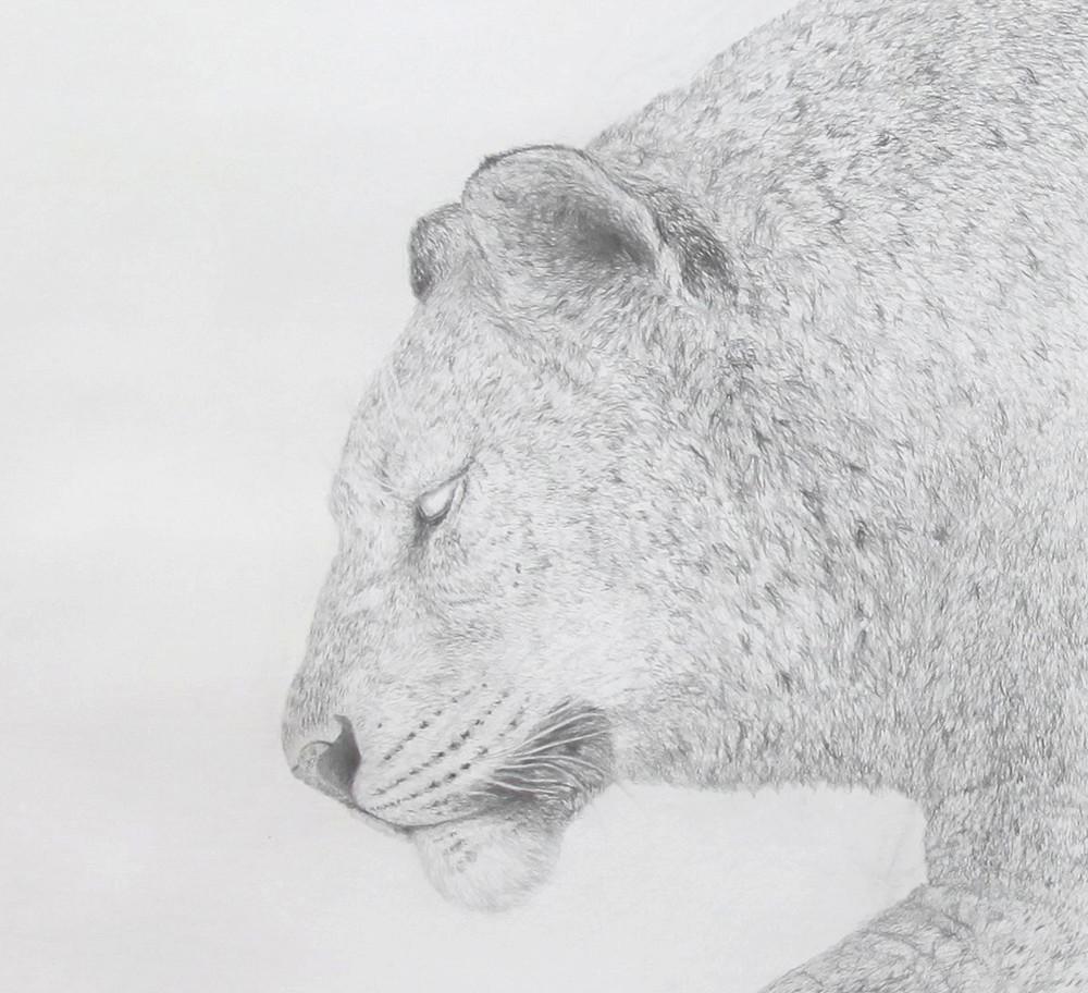 Random work from HENNI KITTI | ELÄIMISTÄ JA PIIRTÄMISESTÄ 2008 - 2011 ////////// ON ANIMALS AND DRAWING 2008 - 2011 | Leijona ja väri; 400 x 150 cm; lyijykynä ja värikynä paperille; 2010