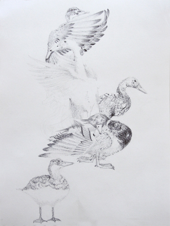 Random work from HENNI KITTI | PIIRUSTUKSET ////////// DRAWINGS | Sorsat; kuulakärkikynä; 2009. Yksityiskokoelmassa.