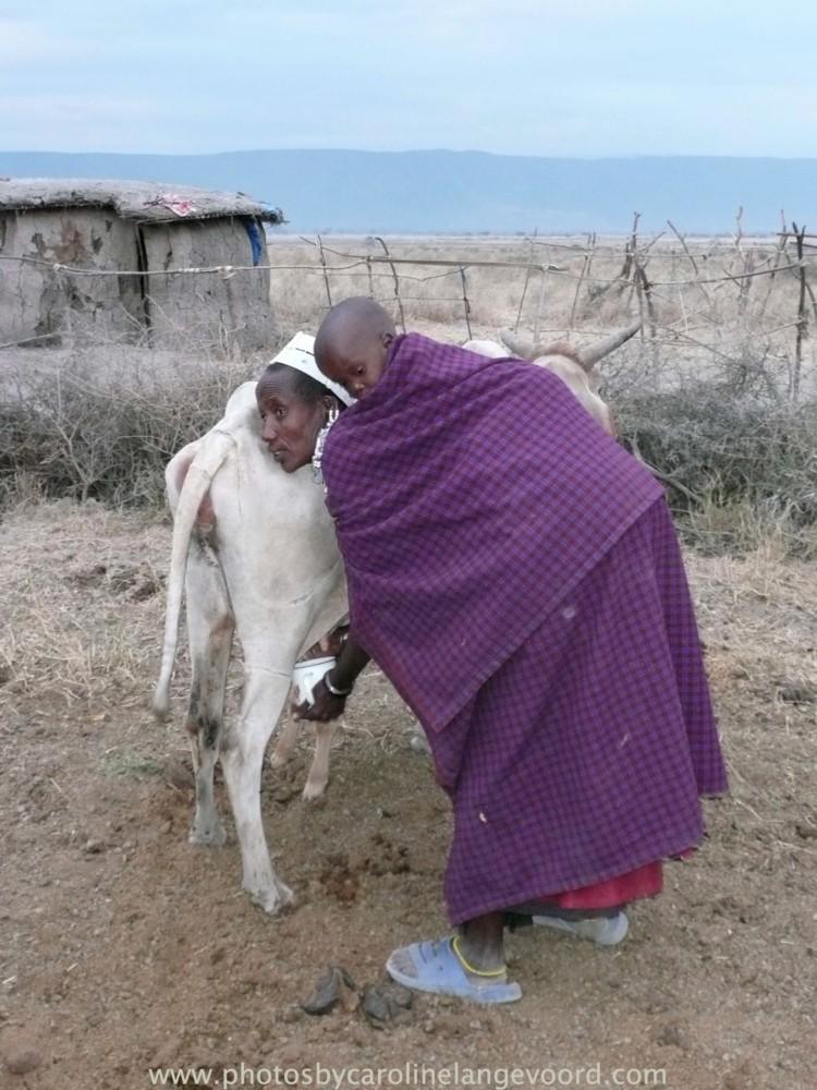 Random work from photos by caroline langevoord | portraits of east africa | getting milk