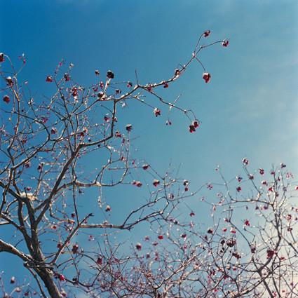 Random work from femke van heugten | _ f r a g m e n t s | berries