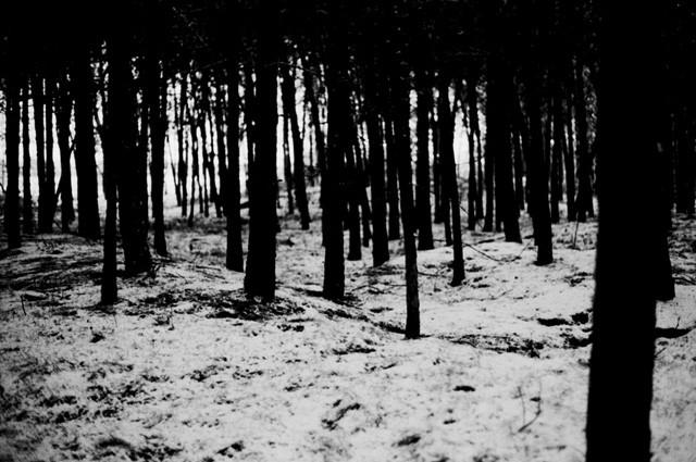 Random work from femke van heugten | _ f r a g m e n t s | forest