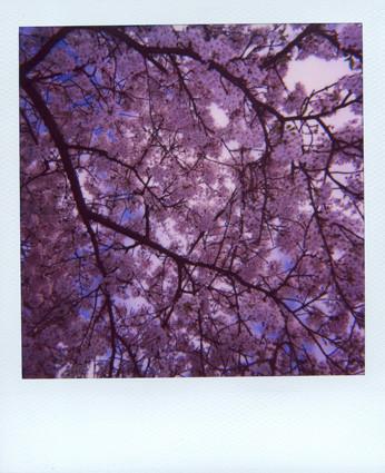 Random work from femke van heugten   _ f r a m e s   blossom